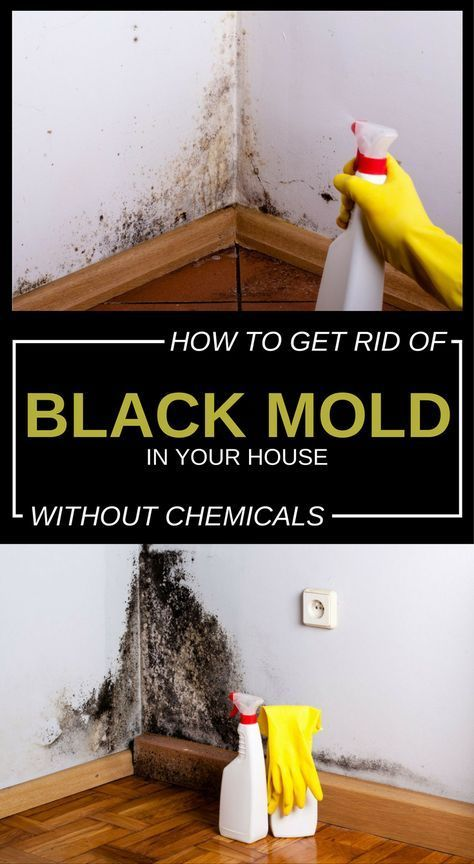 157ee4c45f8597e5c6b2960c37bf0e61 - How To Get Rid Of The Mold In The House