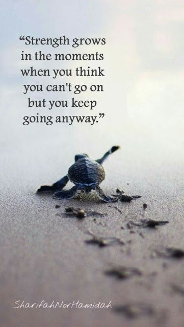 Quote by SharifahNor Uplifting Quotes, Meaningful Quotes, Positive Quotes, Inspirational Quotes, Quotable Quotes, Wisdom Quotes, Quotes To Live By, Me Quotes, Turtle Quotes