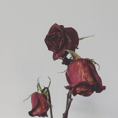 Bunga Mawar Di Tangan