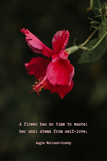 Spring Quotes With A Soulful Shimmer Flower Quotes Spring Quotes Beautiful Flower Quotes