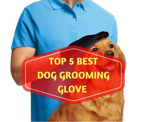 Best Dog Grooming Glove Reviews Top 5 Picks In 2020 Dog
