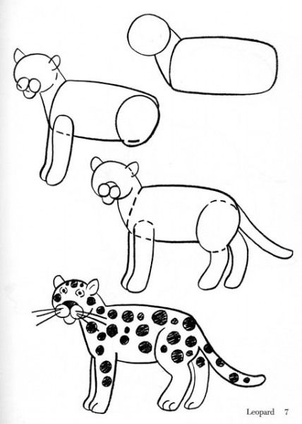 asignar Sedante Una noche  Puma Para Colorear Infantil | Como dibujar animales faciles, Como dibujar  animales, Aprender a dibujar animales