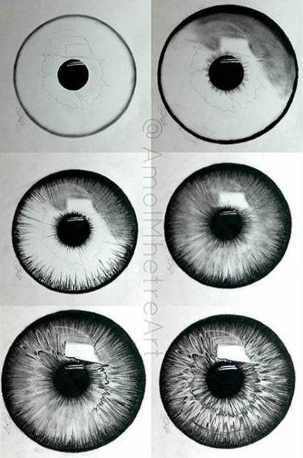 How to draw an iris flower   step by step drawing tutorials.