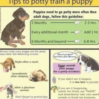 Potty Training Take A Look At These Positive Potty Training Methods To Train Your Pup And Tips Hac Puppy Training Training Your Puppy