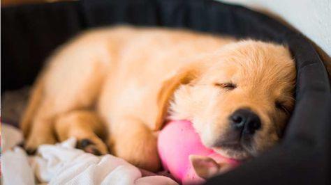sintomas de hongos en perros
