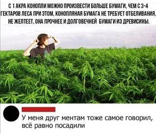 C конопля как созревает марихуана