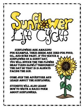The Life Cycle Of The Sunflower Lapbook Lapbook Photosynthesis Life Cycles