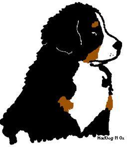 Berner Sennen Hunde Bilder