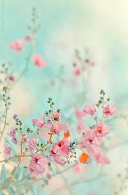 Flowers Beautiful Pink Colour 65 Ideas Flowers With Images