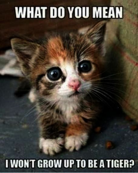 37 Hilarious Animal Pictures Cute Animals Kittens Cutest Cute Cats