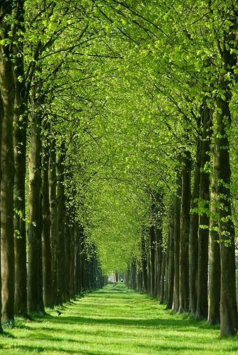List of Pictures: Green Path, Het Loo, Apeldoorn, Netherlands