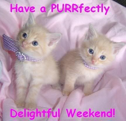 Image result for happy weekend cat picmix