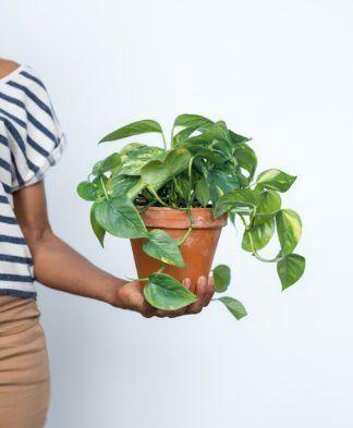 Shop Indoor Plants Bloomscape Indoor Plants Low Light Buy