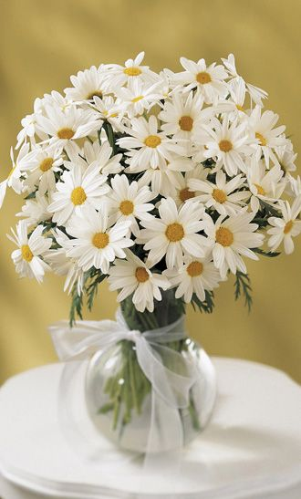 Do you love daisies? Well who doesn't? Easy daisy it. Over 3 dozen cheery white daisies bring a bright day to someone special. Arranged in a glass vase, this sweet bouquet will be welcome for any occasion  SAME DAY DELIVERY OF ABOVE at  herbalorg.com