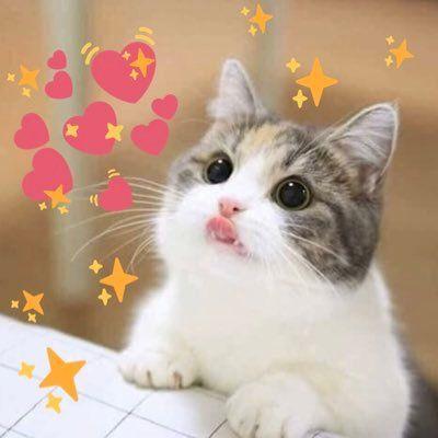 Cat Surrounded By Hearts Meme Cat Memes Cats Cat Tree Plans