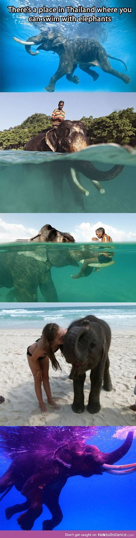 The new addition to my Bucket List…I have ridden an elephant in Thailand. But I have not swam with an elephant in Thailand. Oh The Places You'll Go, Places To Travel, Travel Destinations, Places To Visit, Laos, Dream Vacations, Vacation Spots, Unique Vacations, All Nature