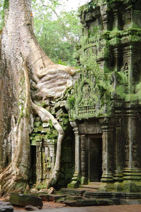 Named as one of the top heritage sites to visit, UNESCOs Angkor is home to an expanse of temples stretching some 400 Here, a silk tree grows over a temple at Ta Prohm in Angkor Wat, Cambodia. Have you visited temples in South East Asia? Ancient Ruins, Mayan Ruins, Ancient Greek, Places To Travel, Places To See, Ta Prohm, Architecture Antique, Angkor Wat, Ankor Wat Cambodia