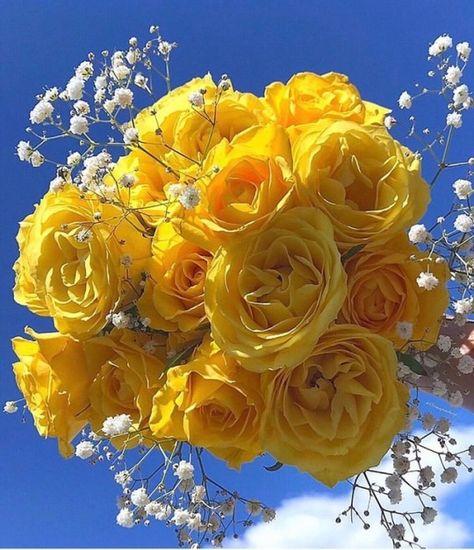 99 Tumblr Blumen Pflanzen Pflanzkubel
