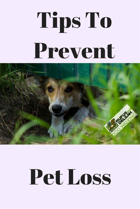 154 Best Lost Pet Prevention Images On Pinterest Lost Pets, Your   Lost Dog  Poster  Lost Pet Poster Template