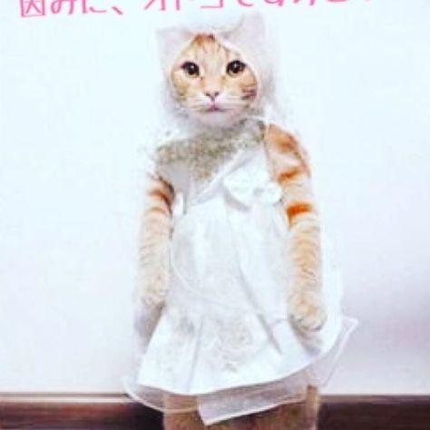 笑ってコラえて! ふいた方、罰としてフォロー押すにゃ!  ID→@40uxj2139c  #ねこ #猫 #動物 #ペット #東京 #面白い #可愛い #かわいい #ダイエット #腹筋 #渋谷 #新宿 #お金 #ネットビジネス #副業 #お小遣い #カフェ #ダイエッター #肉 #魚 #サラダ #犬 #いぬ #イヌ #ネコ #ネコ部 #不労所得 #ワークライフバランス #結婚 #Wedding