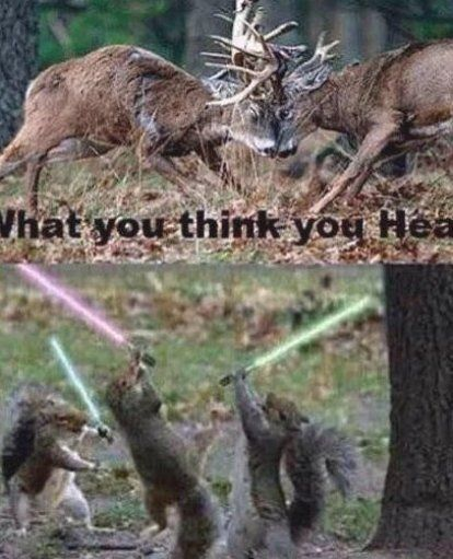 Pin By Malorie Muruaga On Fishing Quotes Couples Funny In 2020 Deer Hunting Humor Hunting Humor Funny Deer
