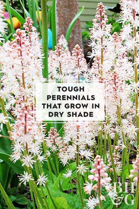 Rely on these easy-care perennials to add color and interest to shady areas- even in the most challenging conditions. Rely on these easy-care perennials to add color and interest to shady areas- even in the most challenging conditions. Outdoor Plants, Outdoor Gardens, Rustic Gardens, Shade Garden Plants, Shade Flowers Perennial, Part Shade Perennials, Full Shade Plants, Flowering Plants For Shade, Shrubs For Dry Shade