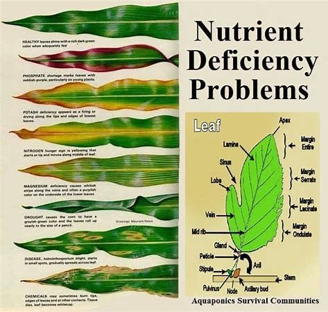 Image result for House Plant Problems Diagnosis | House
