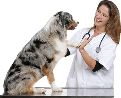 Nationwide Pet Insurance Claim Form Tekil Lessecretsdeparis Co