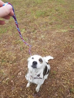 Dogs For Adoption Petfinder Help Pet Adoption Adoption Pets