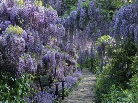 Gorgeous Wisteria Beautiful Gardens Shade Plants Dream Garden