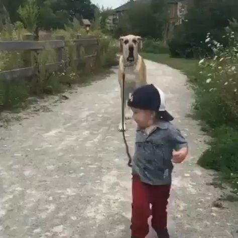 Best friends 🐶 👦 Baby and dog love!