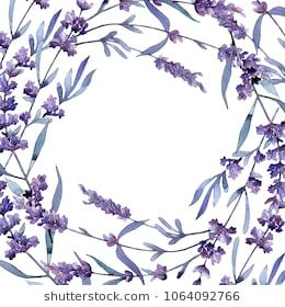 Violet Lavender Floral Botanical Flower Wild Spring Leaf Wildflower Frame Aquarelle Wildflower For Bac Botanical Flowers Watercolor Flowers Floral Botanical