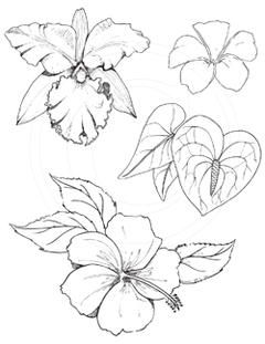 Related Image Flower Drawing Drawings Plant Drawing