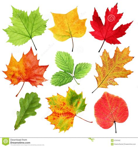 Colorful leaves stock photo. Image of environment, selection