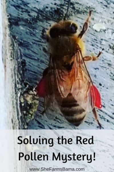 Is My Honeybee Bleeding Silly Me Honeybees Don T Bleed
