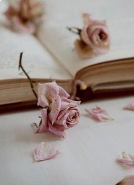 Épinglé par Marcelle Auguste sur fleurs : roses reines