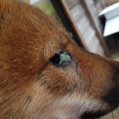 1695af1f1e62b597df1c6c09045b28f5 - How To Get Eye Boogers Out Of Dog S Eyes
