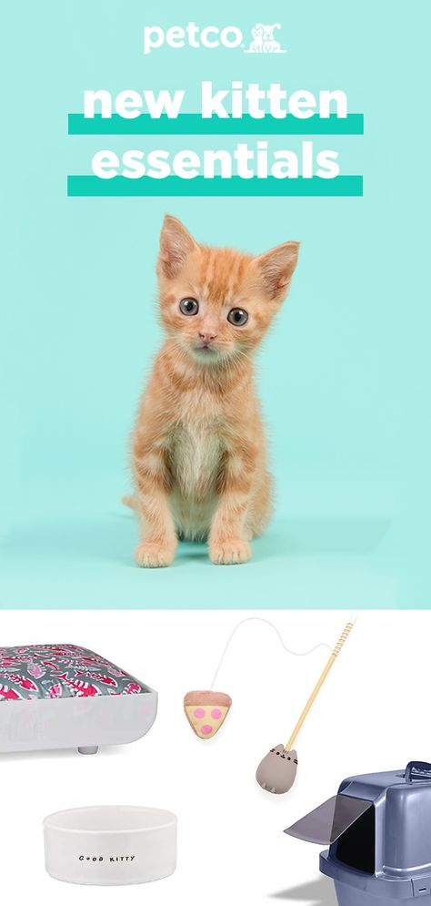 Bringing a new fur baby into your life can be one of the most exciting and rewarding times of your life. Make sure you're ready for your new kitten's arrival by stocking up on all the essentials at Petco.  From litter trays to toys they'll love - we've got everything you need to make you transition into pet parenthood easier.  Shop the collection today.