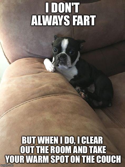 I don't always fart, but when I do... Funny dog meme, Boston Terrier