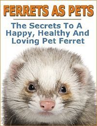 Ferret Natural Emotional And Physical Care Ferret Pet Ferret Funny Ferrets