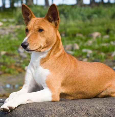 How Many Dog Breeds Do You Know Hypoallergenic Dog Breed