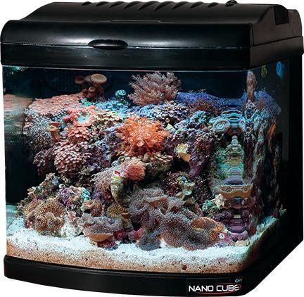 Nano Cube 12 Gallon Tank W Stand Gallon Cube Compact Fluorescent Lamps