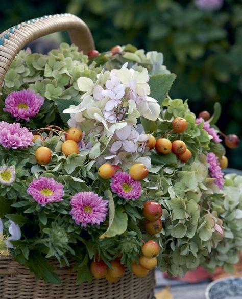 Vaaleanpunaiset hortensiat, koristeomenat ja asterit henkivät syksyä.