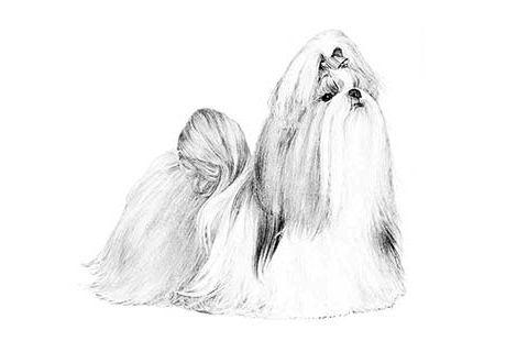 Dee Jay S Shih Tzu Has Shih Tzu Puppies For Sale In Dallas Ga On
