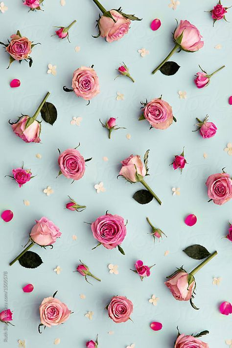 Pink Roses And Rose Buds Against A Blue Background Download This High Resolution Stock Photo By Ruth Rose Background Flower Background Wallpaper Trendy Flowers