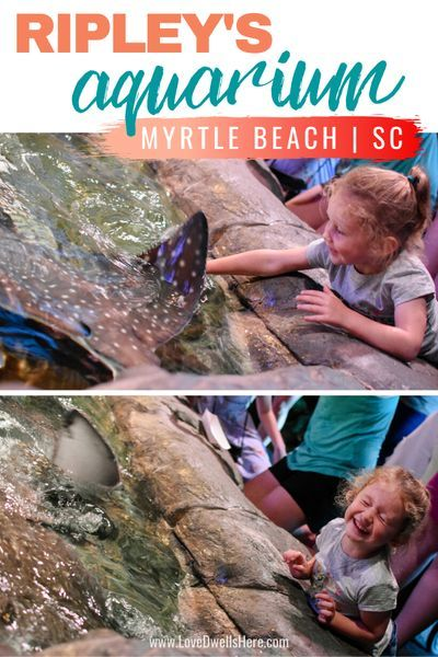 Ripley S Aquarium Of Myrtle Beach Review In 2020 Ripley Aquarium Myrtle Beach Best Vacation Spots