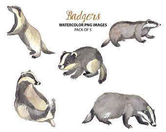 Cute Red Panda Clipart Watercolor Animal Illustrations Etsy In 2021 Badger Illustration Watercolor Animals Animal Illustration