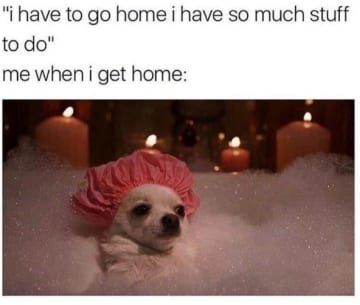 45 Dog Memes That Are Guaranteed To Put You In A Good Mood Funny Dog Memes Funny Animal Memes Animal Memes