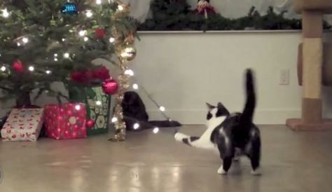 Watch This Hilarious Video Of Cats Vs Christmas Trees Cat Christmas Tree Christmas Cats Cat Holidays