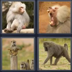 Monos Mandriles Actualizado Disfruta 4 Fotos 1 Palabra